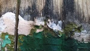 dzięgieć smoła drzewna ochrona drewna konserwacja