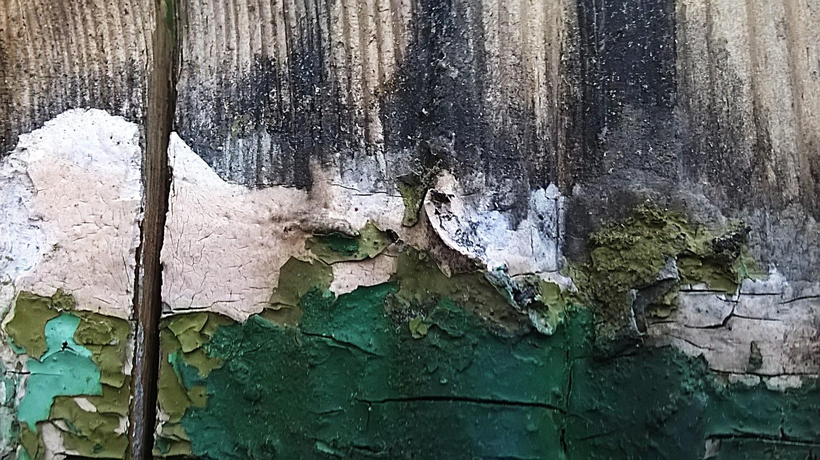 Dzięgieć zabezpiecza drewno nawet na ponad 100 lat. Galeria.